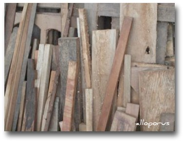 Hardwood timber, Manokwari