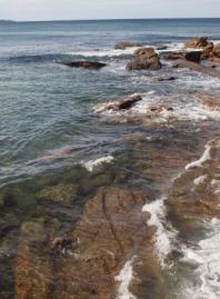 rocky shore NSW