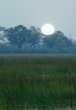 Okavango Africa.jpg