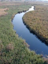 Okavango delta Botswana.jpg