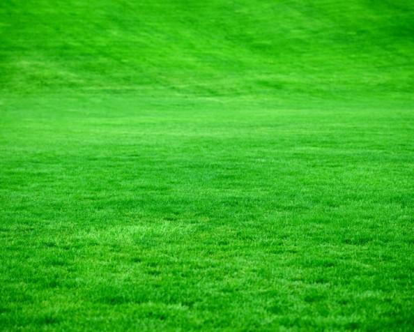 The grass is always greenerproblem