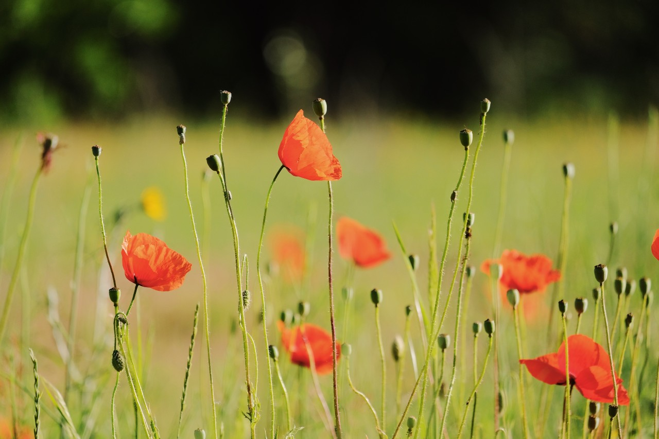 Slashing the tall poppies