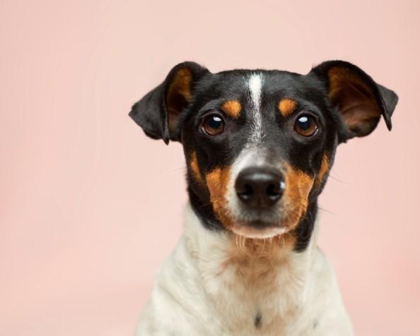 Is dog poo on the sidewalk aresource?